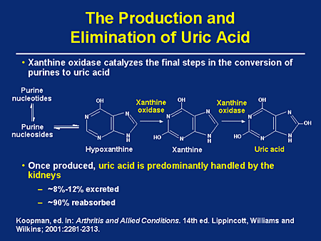 purines to uric acid
